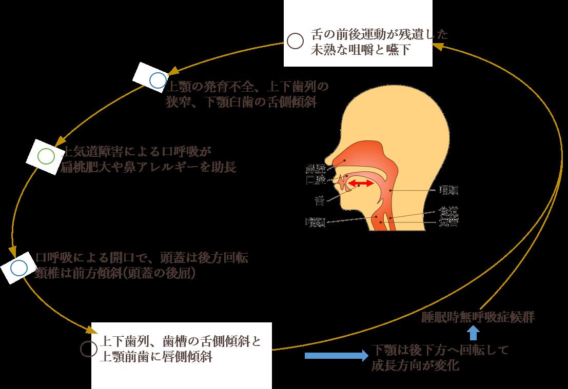 歯ならびだけではなく身体の発育の異常を立て直す